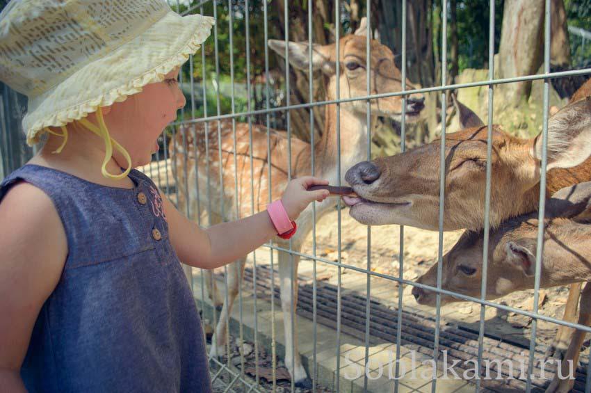 Куала-Лумпур: Perdana Botanical Garden и Парк оленей