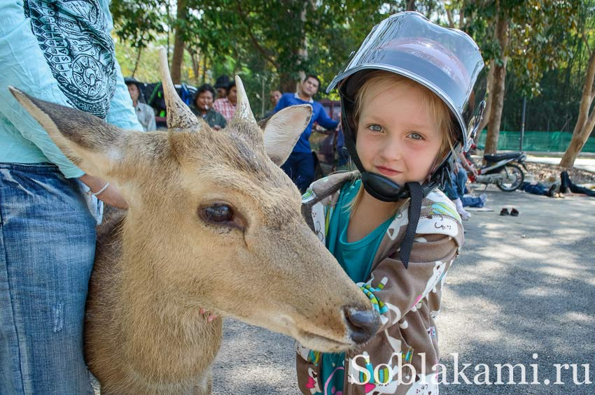 Найт сафари в Чиангмае (Chiang Mai Night Safari)