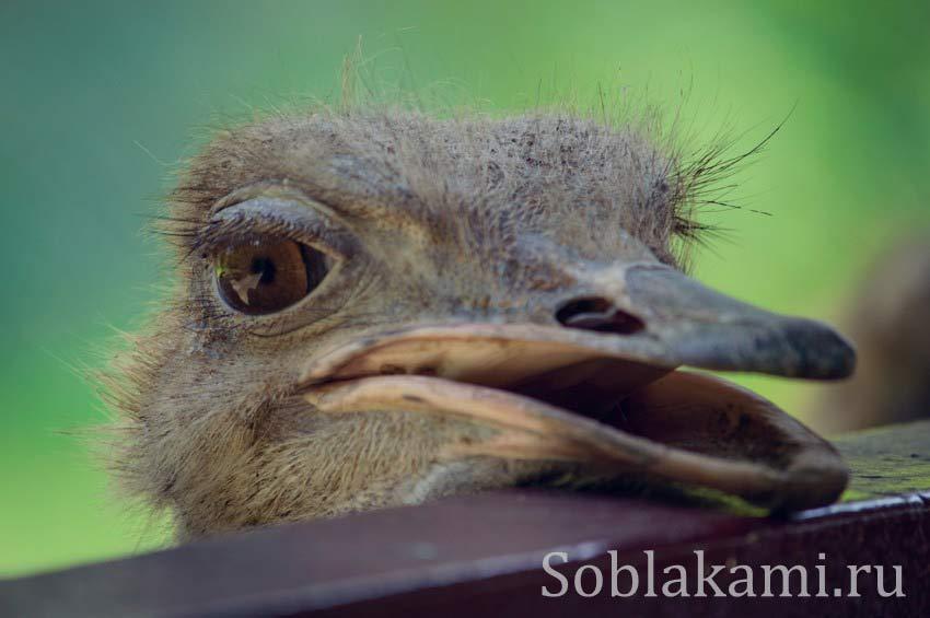 Парк дикой природы на Лангкави (Bird Paradise Wildlife Park Langkawi)