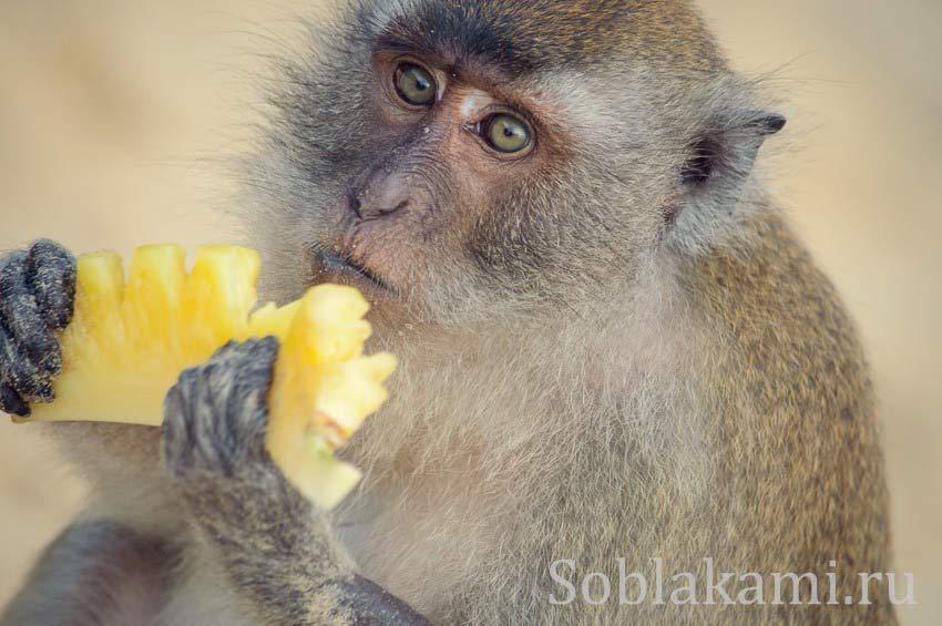 Удивительные обезьяны пляжа Ао Нанг