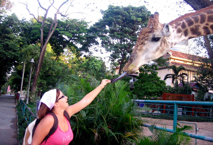Зоопарк в Хошимине: как приручить жирафа