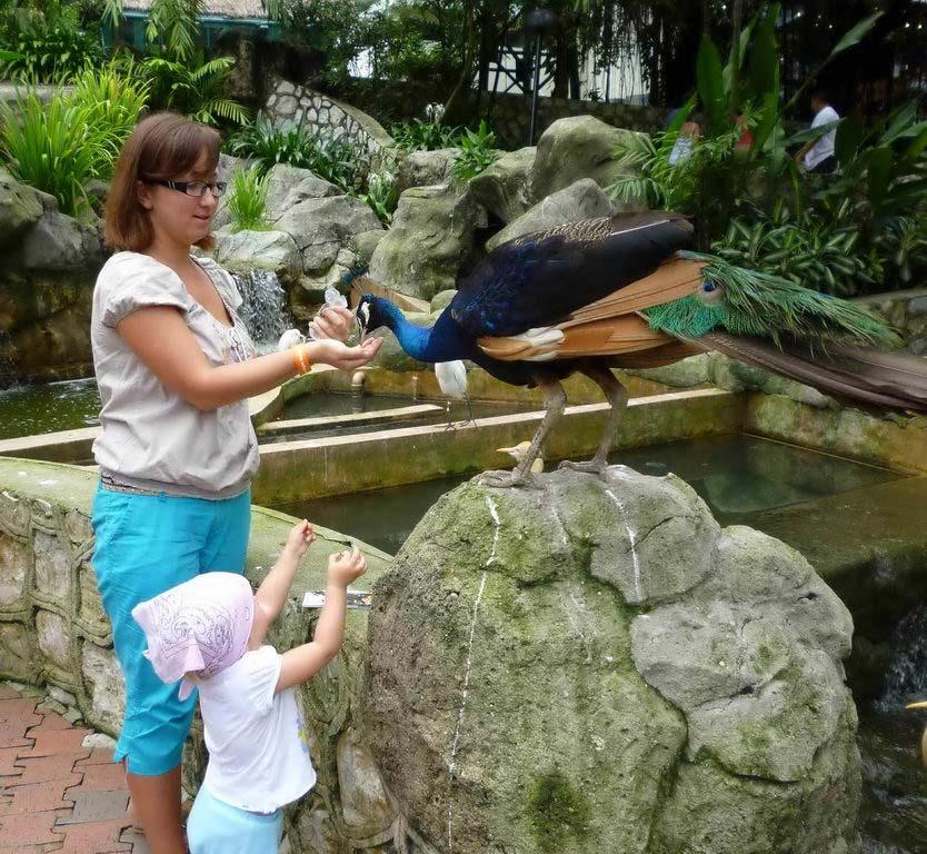 Гигантский Парк птиц в Куала-Лумпуре