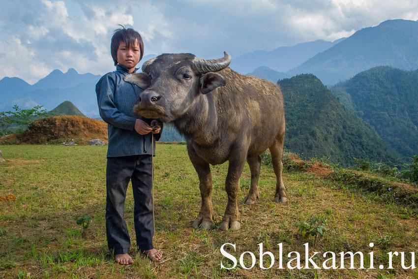 Вьетнам с юга на север: итоги путешествия